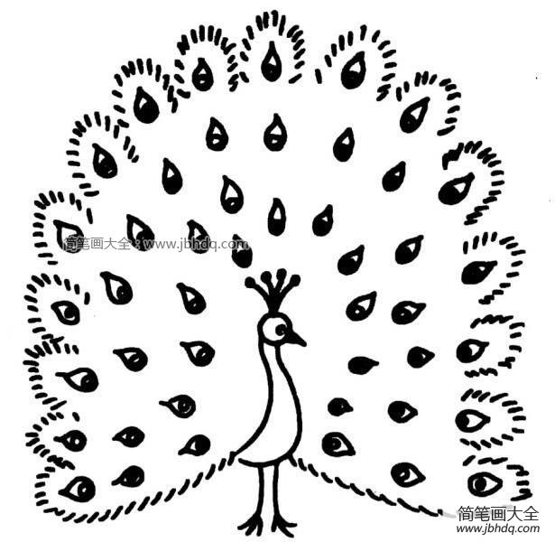 黑白简笔画孔雀