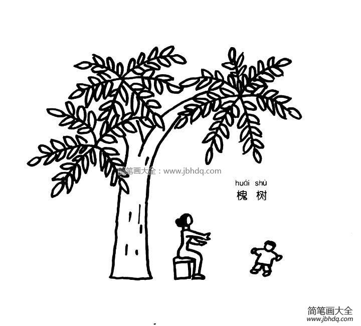 槐树简笔画图片