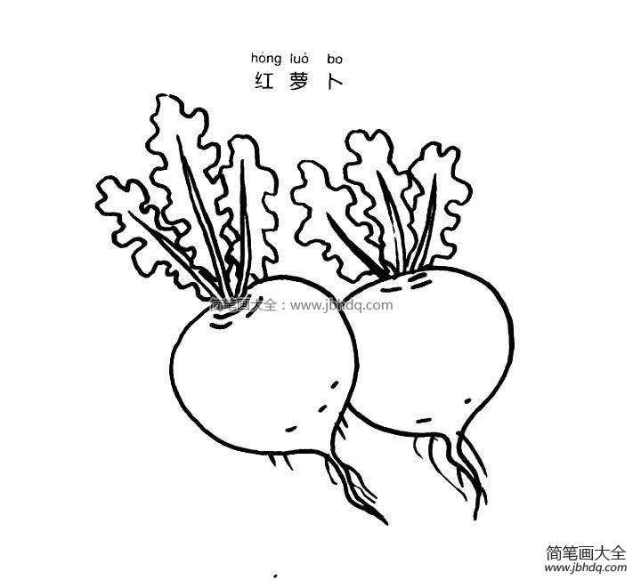 [红萝卜简笔画图片大全]红萝卜简笔画图片
