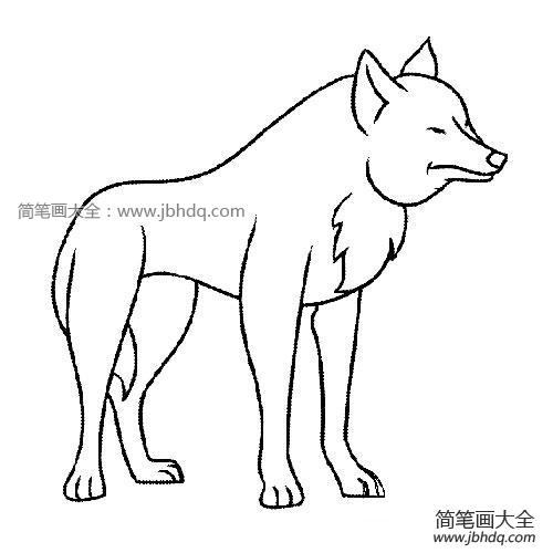 【小狼简笔画大全可爱】可爱的小狼简笔画图片