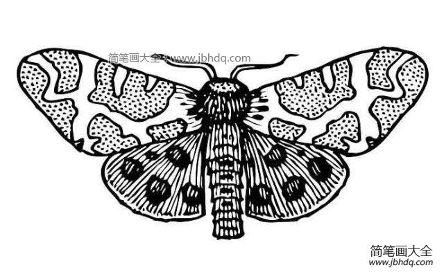 飞蛾图片 简笔画 飞蛾简笔画图片