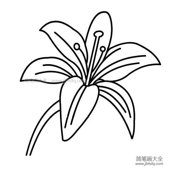 [教师节可以送百合花吗]教师节礼物之百合花