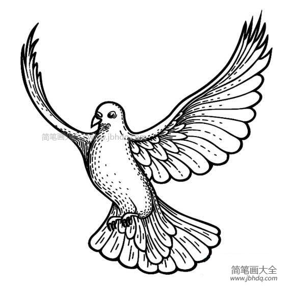漂亮的鸽子简笔画图片大全_漂亮的鸽子简笔画图片