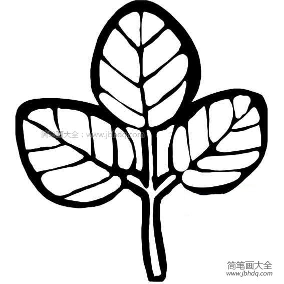 【简笔画树叶图片大全】幼儿树叶简笔画图片