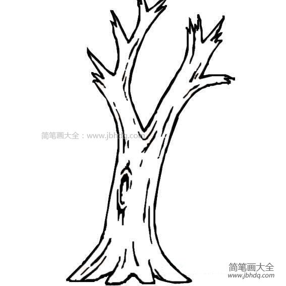 大树树干简笔画图片大全_大树树干简笔画