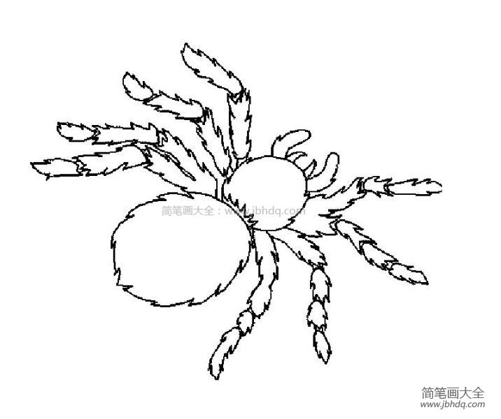 [蜘蛛图片简笔画]可怕的蜘蛛简笔画