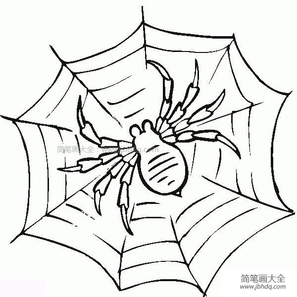 【蜘蛛图片简笔画】结网的蜘蛛简笔画