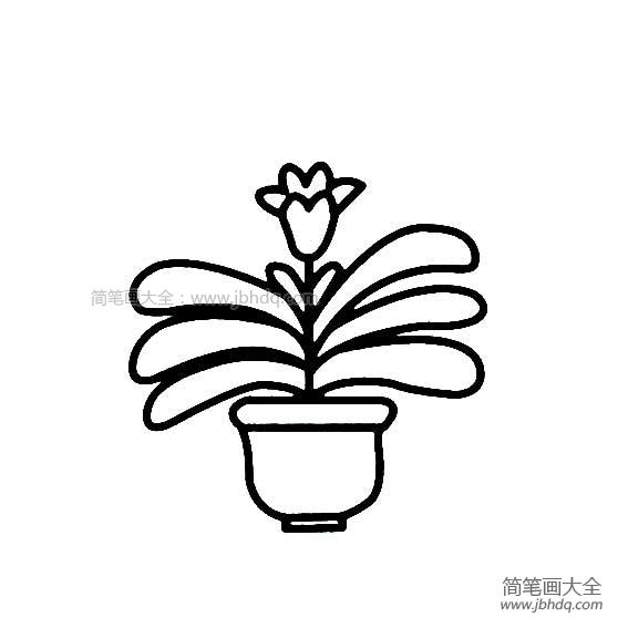 【花盆简笔画 彩色】花盆里的花朵简笔画