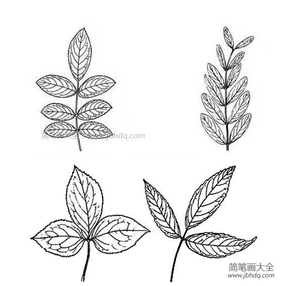 柳树叶简笔画_多种树叶简笔画