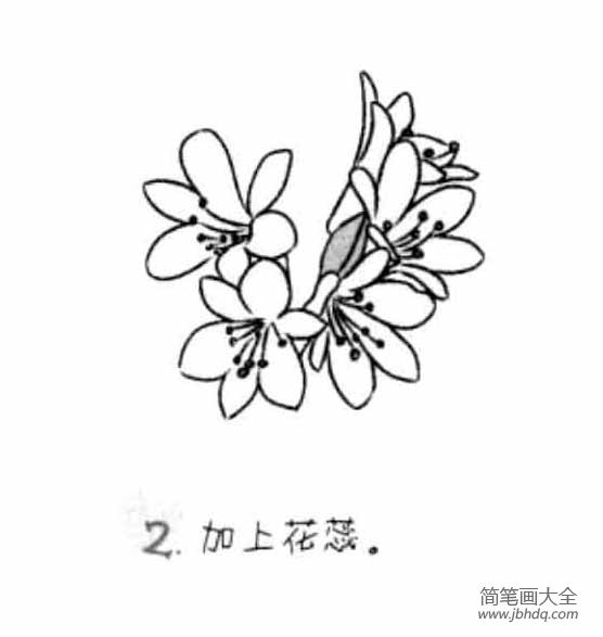 【君子兰简笔画图片大全】儿童花朵简笔画君子兰