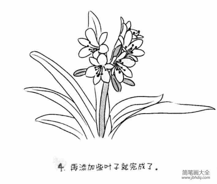 儿童花朵简笔画君子兰