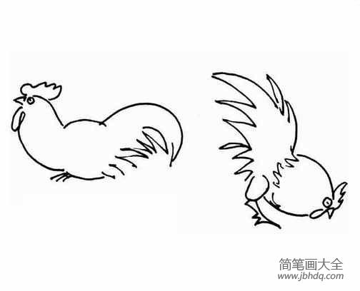 鸡的简笔画大全大图_鸡的简笔画大全