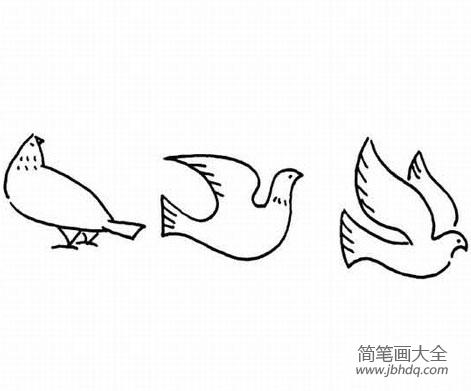 [简笔卡通画动物]幼儿动物简笔画,和平鸽
