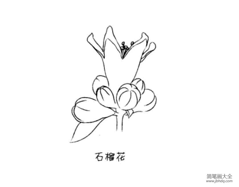 花朵简笔画大全 石榴花