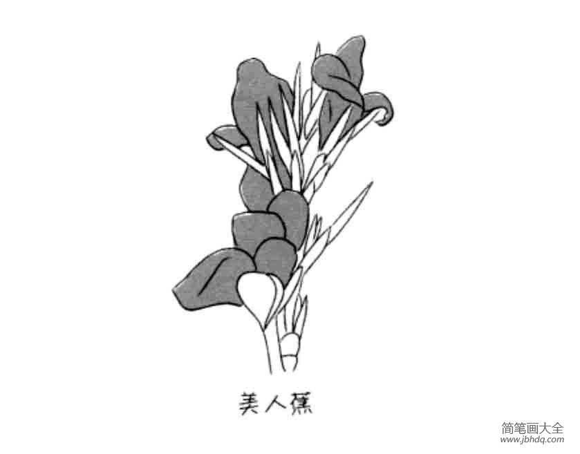 花朵简笔画大全 美人蕉