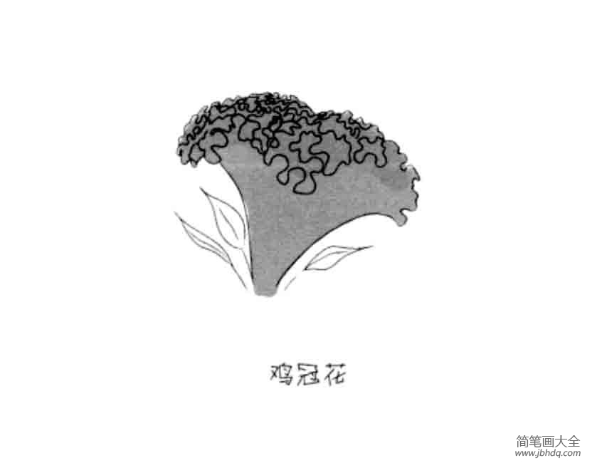 花朵简笔画大全 鸡冠花