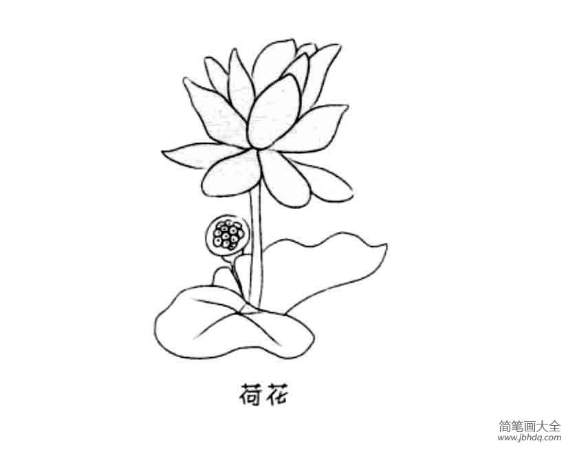 花朵简笔画大全 荷花