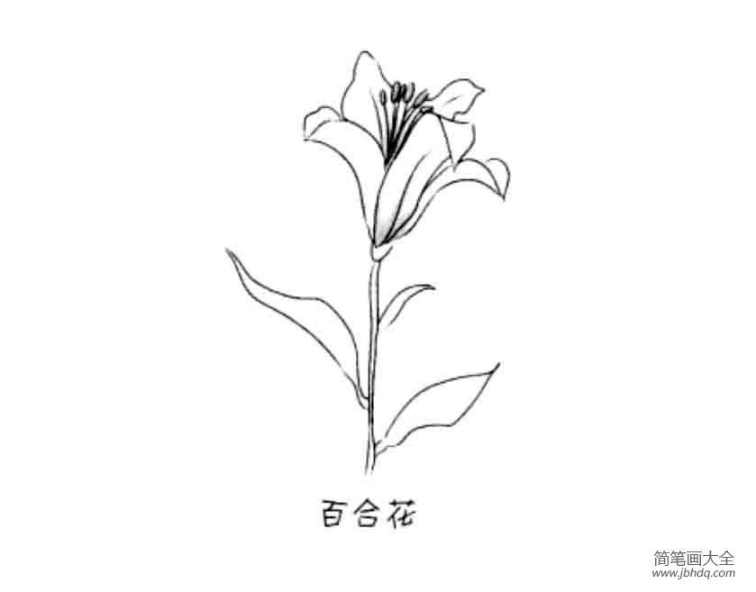 花朵简笔画大全 百合花