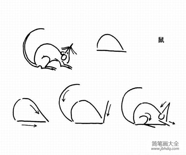 老鼠的简笔画教程