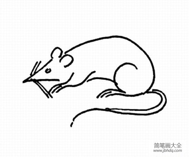 小老鼠简笔画图片