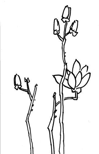 [玉兰花简笔画图片]玉兰花简笔画画法