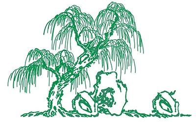 【春天柳树简笔画图片大全】春天柳树简笔画图片