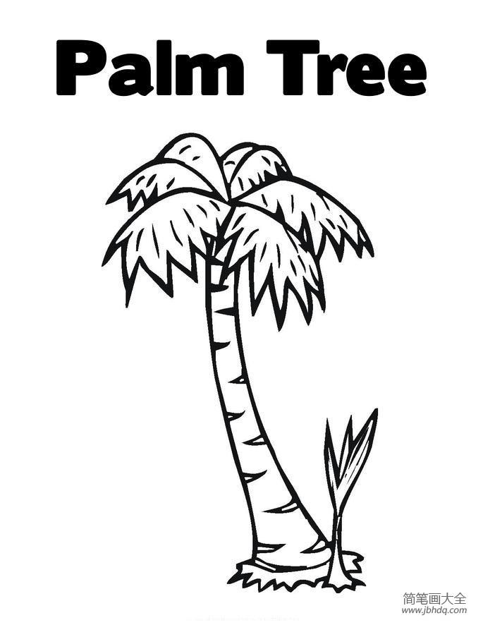 【植物简笔画图片大全】植物简笔画大全,椰子树简笔画