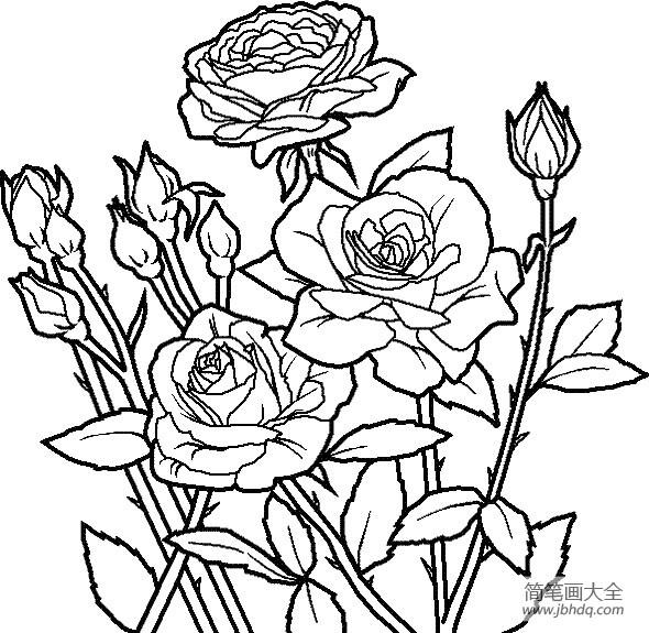 花朵的画法大全带刺的玫瑰简笔画画法 花朵简笔画 简笔画大全