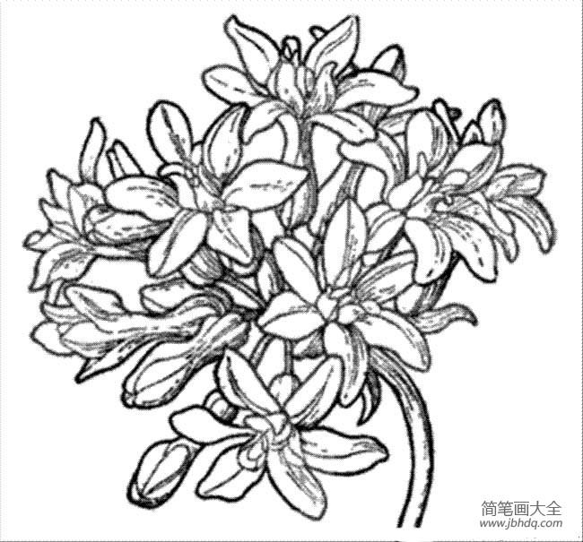 花朵图片 漂亮的绣球花简笔画图片