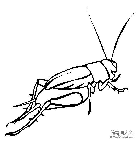 昆虫图片 蟋蟀简笔画图片
