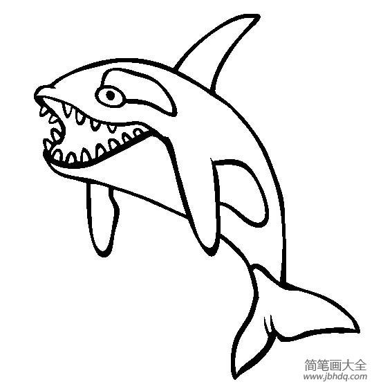 [海洋生物圖片虎鯨簡筆畫圖片大全]海洋生物圖片,虎鯨圖片