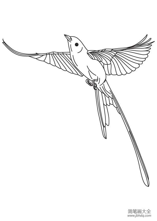 森林卫士布谷鸟简笔画