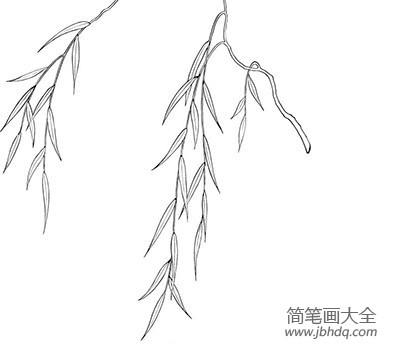 春天的柳树简笔画|春天的柳树简笔画