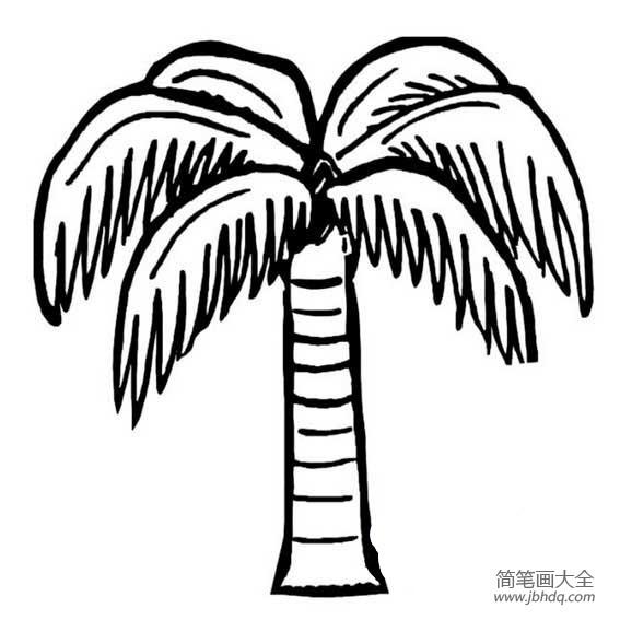 【椰子树怎么画简笔画】幼儿园椰子树简笔画的画法