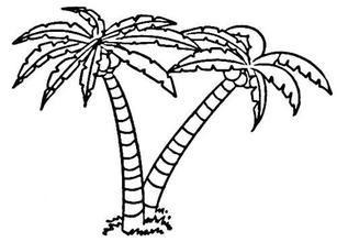 椰子树简笔画图片大全_儿童椰子树简笔画图片