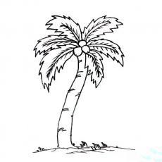 椰子树的画法简笔画_幼儿椰子树简笔画画法