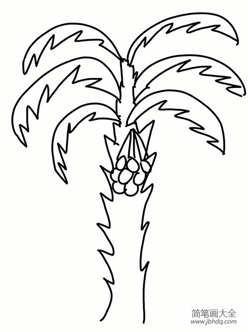 花的简笔画 简单易学_简单易学的椰子树简笔画