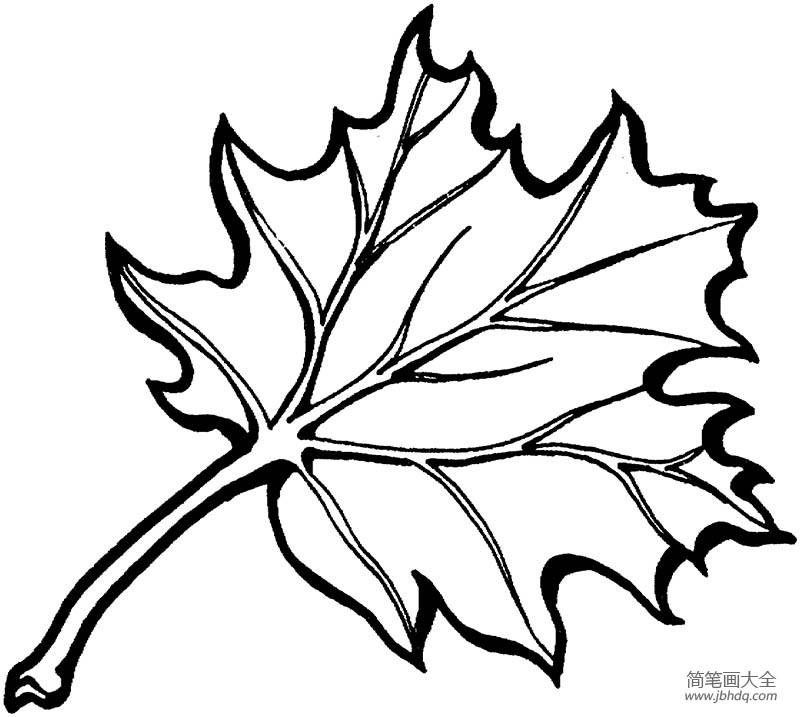 【速写树叶的画法】橡树树叶的画法