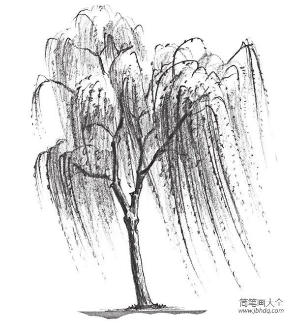 【素描初学者绘画步骤图】素描垂柳的绘画技法