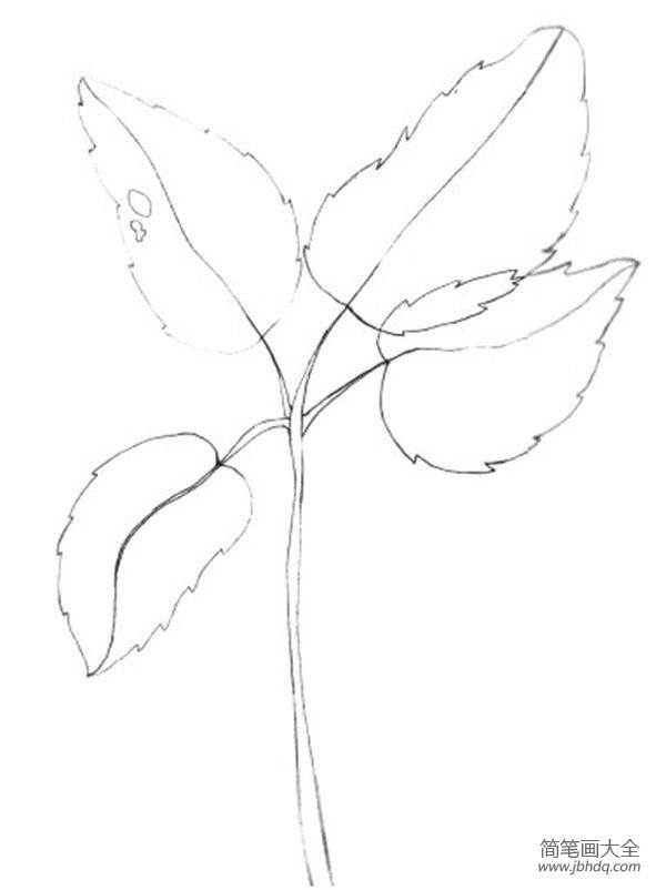 【水彩树叶画法】水彩树叶绘画技法