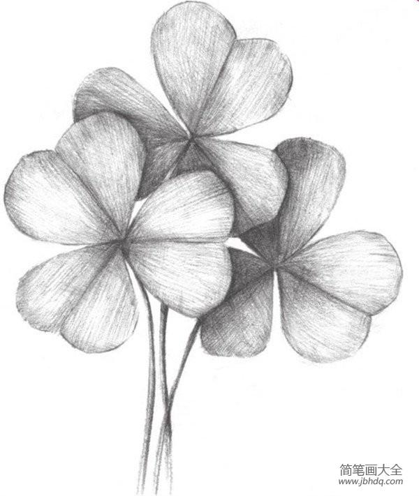 初级素描绘画教程|素描三叶草的绘画教程