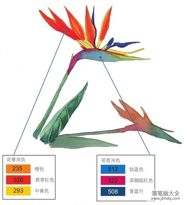 水彩笔_水彩长投影示例天堂鸟绘画教程