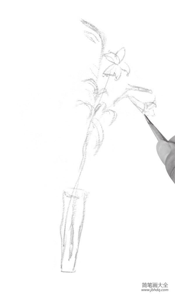 百合花绘画图片_速写百合花的绘画教程