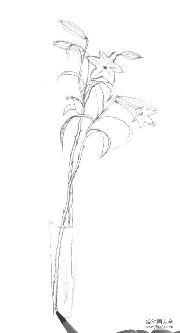 速写百合花的绘画教程