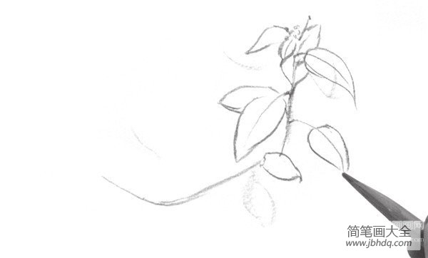[速写风景树叶子]速写叶子的绘画技法