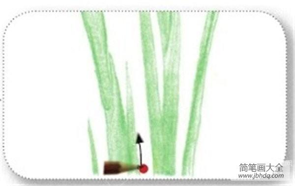 彩铅中式鸢尾的绘画技法