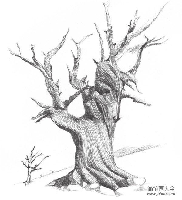 【初级素描绘画教程】素描枯树的绘画教程