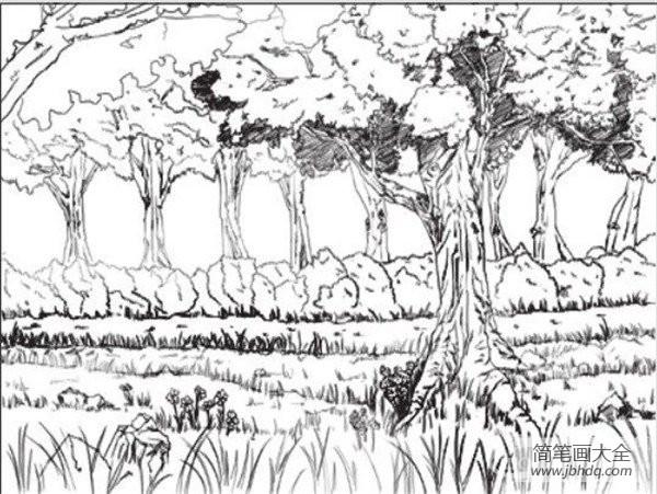 速写树的画法|速写树林的绘画技法
