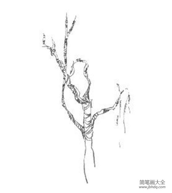 速写树的画法|速写树丛的绘画步骤