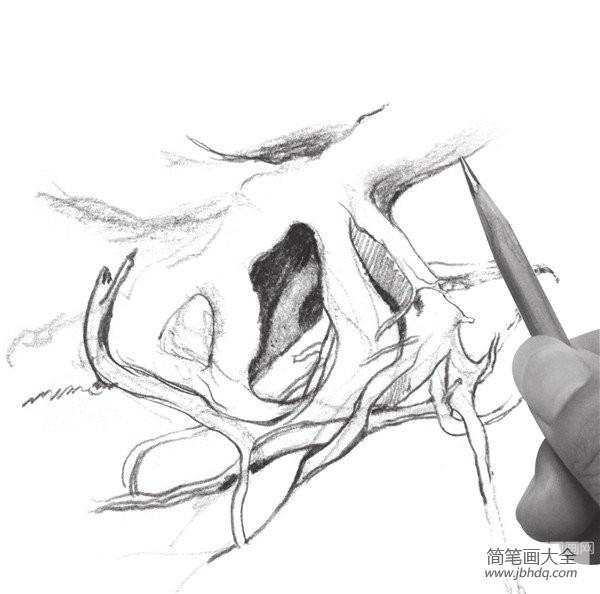 速写树根的绘画教程